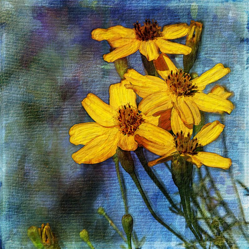 Marigolds-painterly